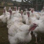 GreenAg Turkey